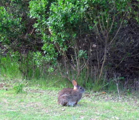 A not-very-shy little bunny on the side of the trail.