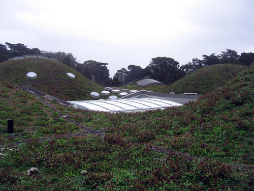 Native plants on the green roof