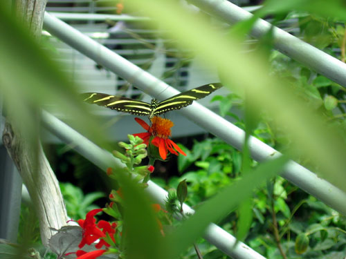 Butterfly in the rainforest