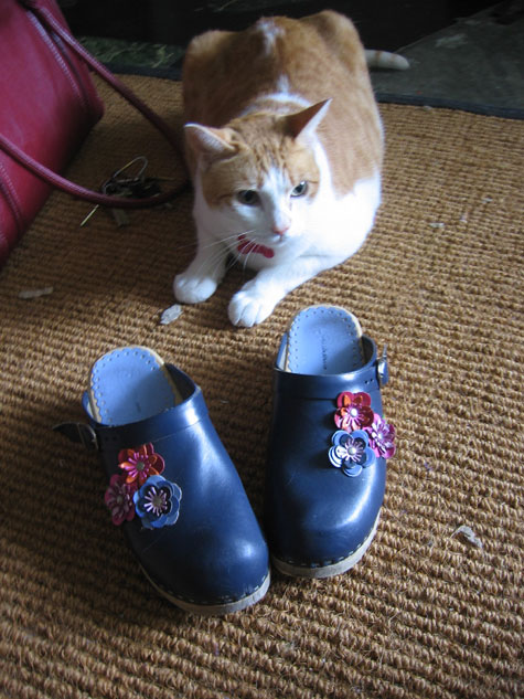 Lovely lovely shoes and a lovely lovely cat